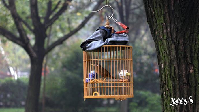 Путешествие по Китаю. Птицы в парке