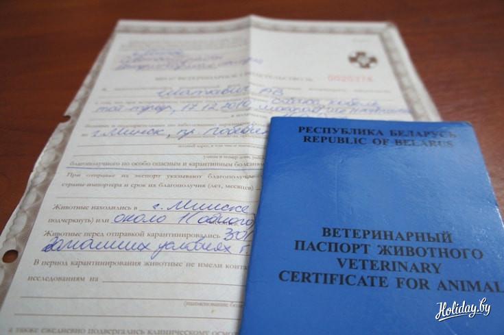 образец паспорта собаки поводыря